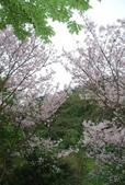 100之櫻花:DSC_0193.JPG