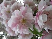 花園:IMG_8252