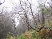太平山翠峰湖山毛櫸步道:調整大小100_0802.JPG