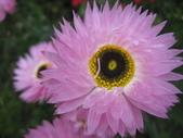 2011菜花園:IMG_6873_調整大小.JPG