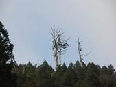太平山&見晴古道:調整大小DSC_0804.JPG