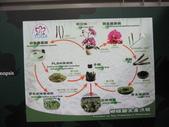 2011台北國際蘭展:IMG_6091_調整大小.JPG