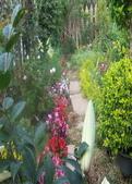 菜花園:調整大小103_1636.JPG