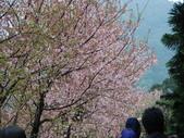 99---櫻花林:調整大小DSC_0871