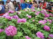 花博--春之花頌:IMG_7251_調整大小.JPG