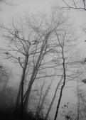 太平山&見晴古道:調整大小旋轉DSC_0893.JPG