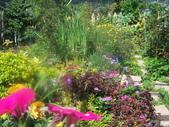 菜花園:調整大小103_1600.JPG