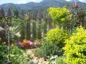 菜花園:調整大小103_1599.JPG