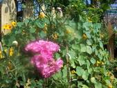 菜花園:調整大小103_1621.JPG
