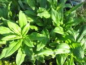 99-----菜花園:IMG_3181_調整大小