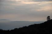 竹子湖:DSC_0178_調整大小_調整大小.JPG