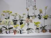 2011台北國際蘭展:IMG_6424_調整大小.JPG