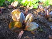 99-----菜花園:IMG_2755_調整大小