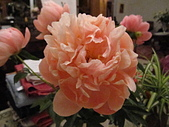 花見:IMG_9839