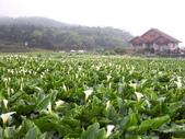 竹子湖:複製 -102_2366_調整大小.JPG