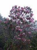太平山翠峰湖山毛櫸步道:調整大小100_0886.JPG