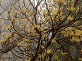 太平山翠峰湖山毛櫸步道:調整大小重新曝光DSC_1760-----------.jpg