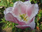 99-----菜花園:IMG_4513_調整大小