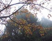 太平山翠峰湖:調整大小101_8756.JPG