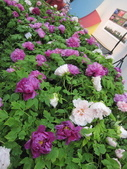 花博--春之花頌:IMG_7261_調整大小.jpg