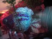 2011台北國際蘭展:IMG_6065_調整大小.JPG