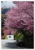 101年武陵櫻花:DSC_0212.jpg