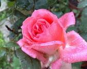 花球&草花:調整大小200903241143.jpg