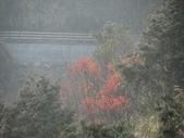 太平山&見晴古道:調整大小DSC_0802.JPG
