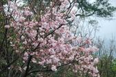 100之櫻花:DSC_0292.JPG