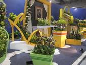 2011台北國際蘭展:IMG_6114_調整大小.JPG