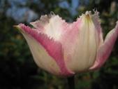 99-----菜花園:IMG_4518_調整大小