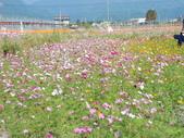太平山&見晴古道:調整大小DSC_0662.JPG