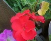 菜花園:調整大小103_1633.JPG