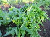 99-----菜花園:IMG_2761_調整大小