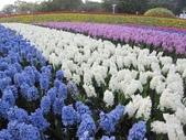 花博--春之花頌:IMG_4741.JPG