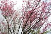 竹子湖:DSC_0089_調整大小_調整大小.JPG