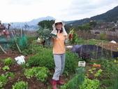 菜花園:調整大小102_9912.JPG