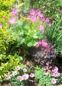 菜花園:調整大小103_1607.JPG