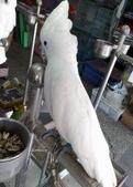 鳥:調整大小20081203515.jpg