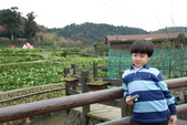 竹子湖:DSC_0133_調整大小_調整大小.JPG