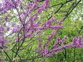花園:IMG_8267
