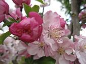 花園:IMG_8246