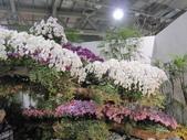 2011台北國際蘭展:IMG_6055_調整大小.JPG