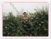2011玫瑰:IMG_0810_調整大小.JPG