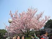 2011天元宮櫻花:IMG_7111.JPG