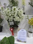 2011台北國際蘭展:IMG_6388_調整大小.JPG