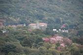 竹子湖:DSC_0038_調整大小_調整大小.JPG
