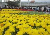 花博--春之花頌:IMG_4803.JPG