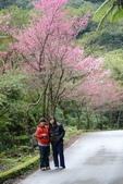 竹子湖:DSC_0045_調整大小_調整大小.JPG