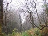 太平山翠峰湖山毛櫸步道:調整大小100_0801.JPG